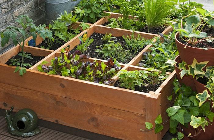 Orto sul balcone in inverno cosa e quando seminare for Giardino invernale