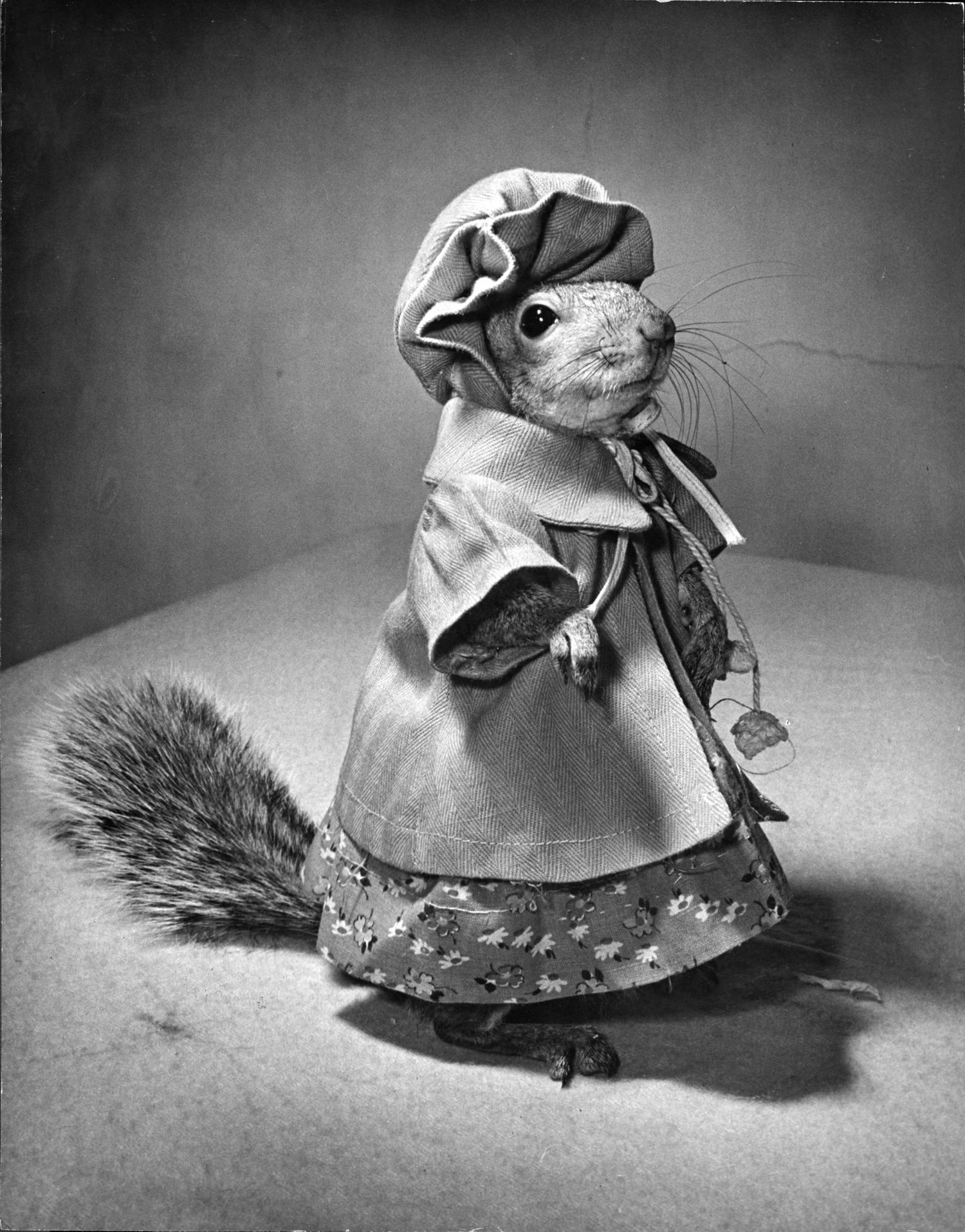 A squirrel wearing a baby doll's dress.